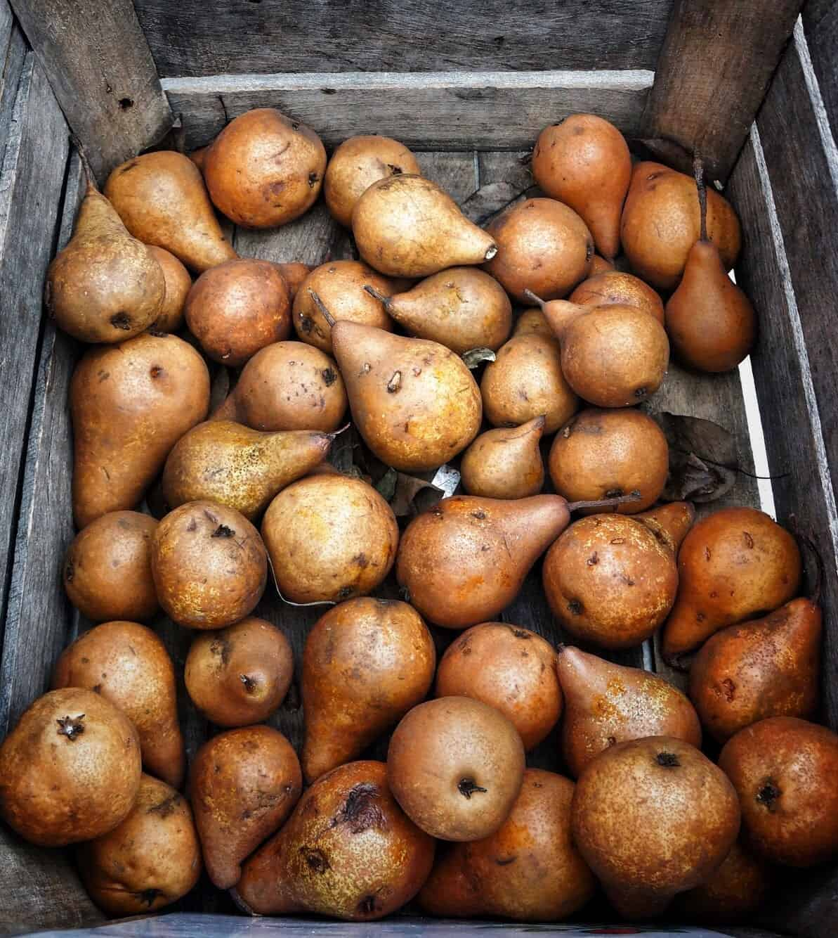 bosc pears in a wood crate